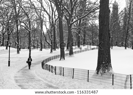 """""""Winter Path Central Park"""" A black and white view of Central Park after afresh snowfall. - stock photo"""