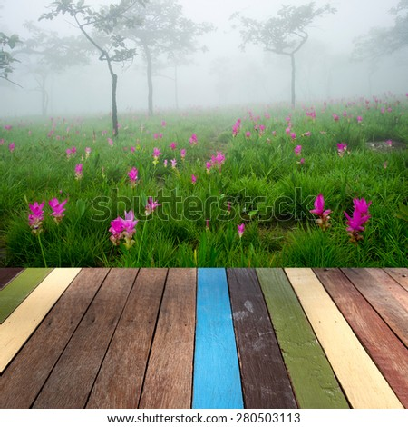 Wood table top on siam tulip field background montage concept - stock photo