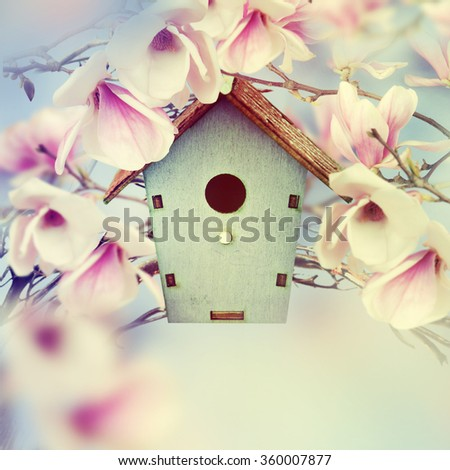 Wooden feeder at the magnolia tree. Spring background. - stock photo