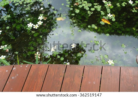 wooden planks, surface of the pond and beautiful water plants - stock photo