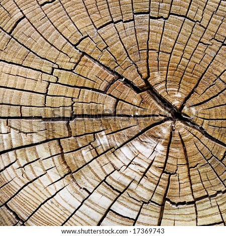Wooden texture. It is possible to use as a background. [Best for Web Resolution] - stock photo