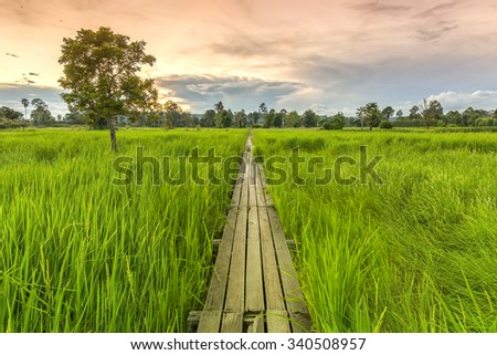 100 year-old wooden bridge between rice field with sunlight at Khonburi, Nakhon Ratchasima, Thailand - stock photo