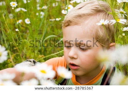 3 years old boy on daisy field - stock photo