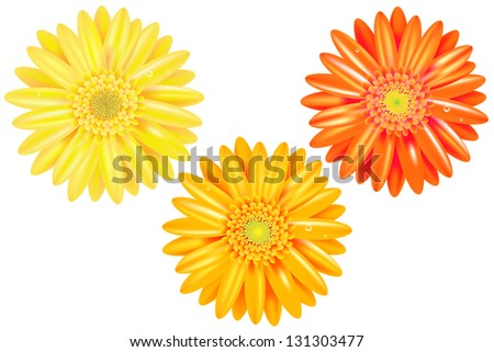 3 Yellow And Orange Gerbers, Isolated On White Background - stock photo