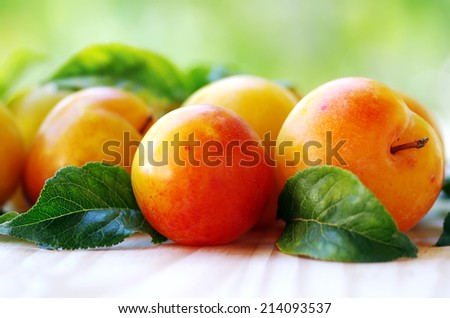 yellow plums on green background  - stock photo