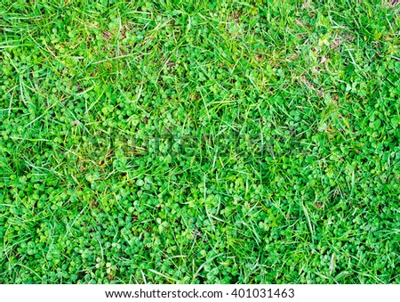 young spring grass on the lawn - stock photo
