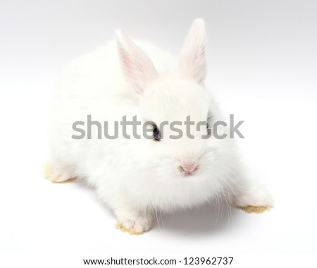 young white rabbit isolated on white - stock photo