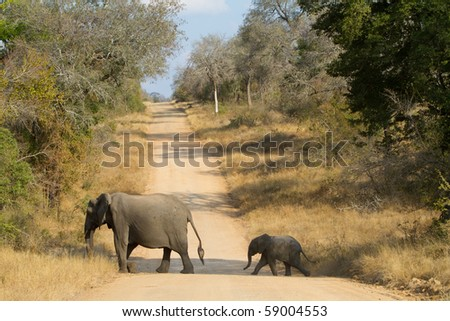A baby elephant following its mother - stock photo