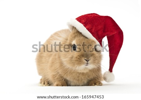 a baby rabbit with a christmas hat - stock photo