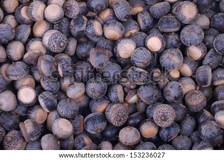 A background image of many brown acorns. - stock photo