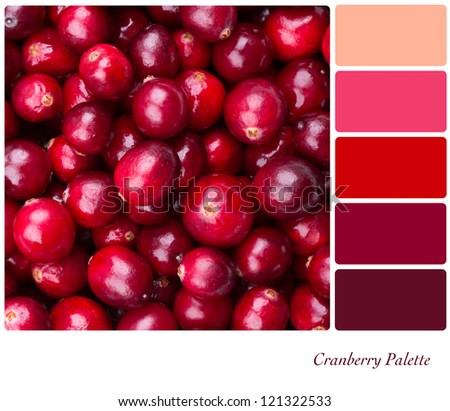 A background of fresh, juicy cranberries. Colour palette with complimentary colour swatches - stock photo