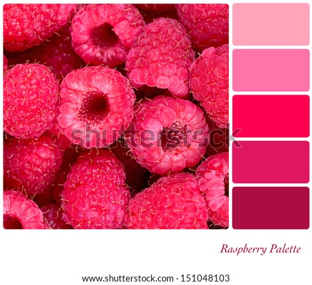 A background of fresh raspberries in a colour palette with complimentary colour swatches - stock photo