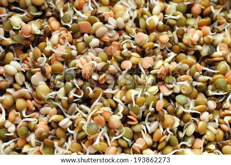 A background variety of organic and healthy green, brown, and orange or red lentil seeds sprouting and ready to eat in various ways. - stock photo
