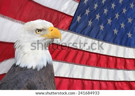 A Bald Eagle In Front of an American Flag Waving in the Breeze  - stock photo