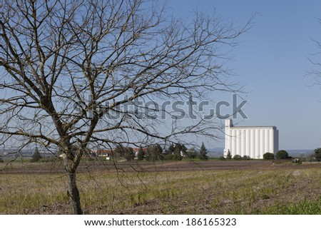 A barn and a silo in the middle of a corn field.  - stock photo