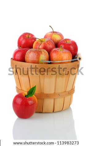 A basket full of fresh picked Gala Apples. Vertical format over a white background with reflection. - stock photo