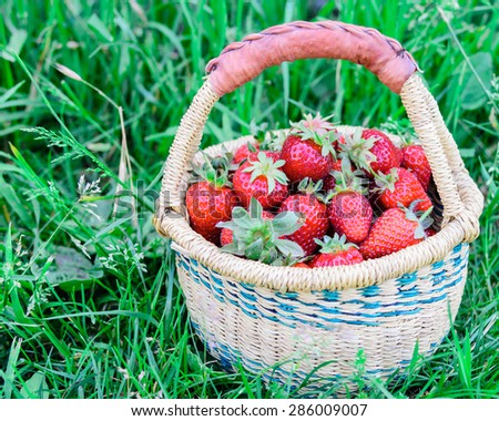 A basket of fresh organic strawberries with green grass background. These strawberries are handpicked from an organic farm in Puyallup, Washington State, US. Coy space. - stock photo