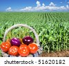 a Basket of fresh vegetables with a maize field in the background - stock photo
