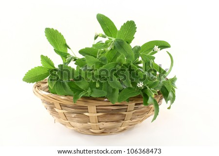 a basket with Stevia on a white background - stock photo