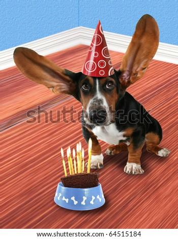 a basset hound with a piece of cake - stock photo