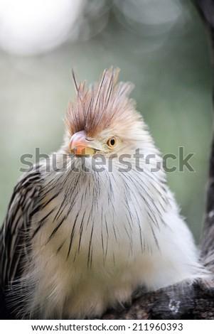 a beautiful african bird.  - stock photo