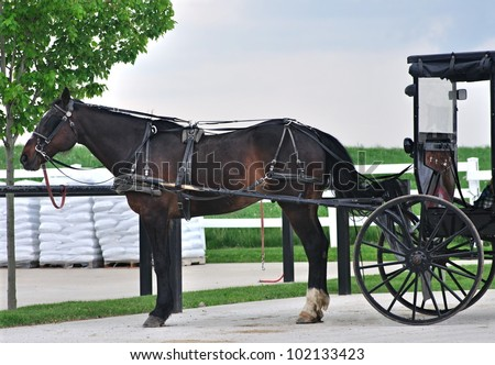 A beautiful Amish horse and buggy. - stock photo