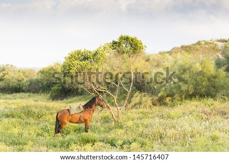 A beautiful brown spanish horse standing next to a tree in Tarifa Andalusia Spain - stock photo
