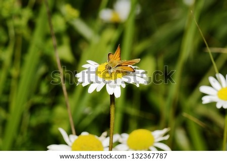 A beautiful butterfly pollinating a flower - stock photo