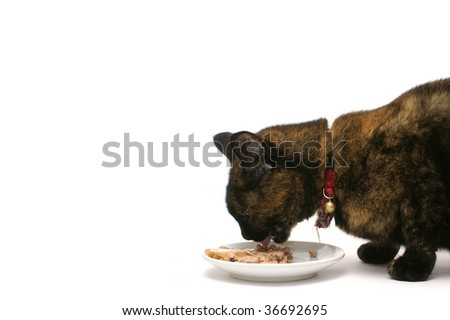 a beautiful cat eating his meal - stock photo