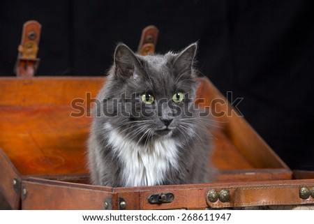 A beautiful cat in a suitcase. - stock photo