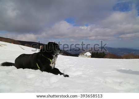 A beautiful dog lying in the snow - stock photo