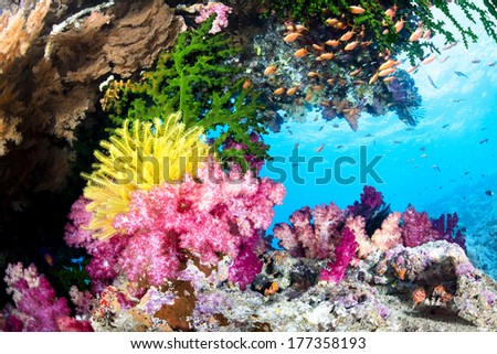 A beautiful, exotic tropical reef covered with vibrant soft and hard corals and a yellow crinoid in clear water. - stock photo