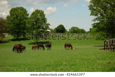 A beautiful farm with horses grazing in the grass with their newborn foals.                                 - stock photo