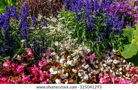 A beautiful flower garden of colorful geraniums, salvia and impatiens plants .  - stock photo