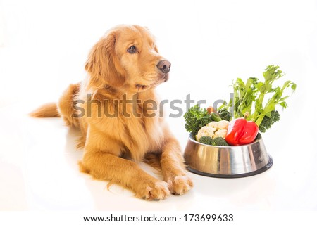 A beautiful golden retriever laying down next to a bowl of fresh vegetables - stock photo