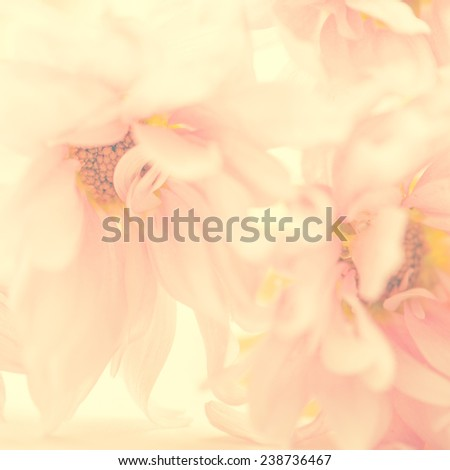 A beautiful light pink color flower background. Extreme close up of petals. - stock photo