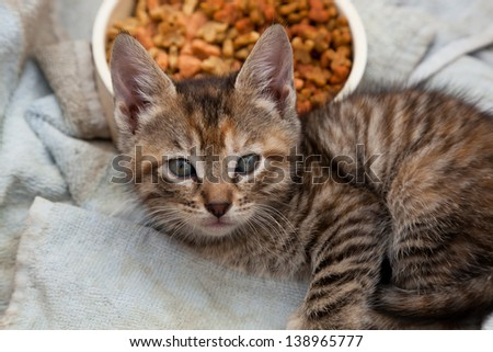 A beautiful little striped kitten laying next to its food bowl on a dirty towel and up for adoption. - stock photo