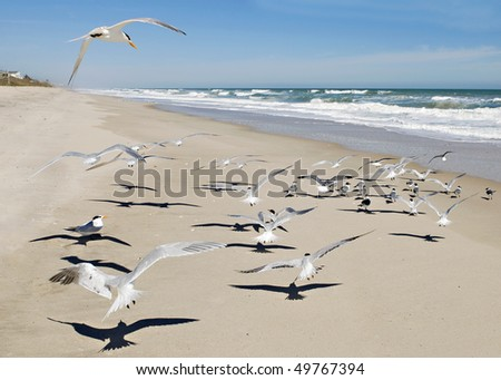 A beautiful ocean scene with a flock of flying seagulls on a sunny day, horizontal with copy space - stock photo