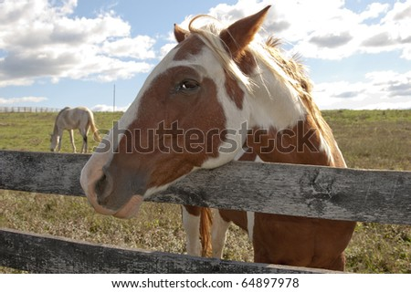 A beautiful paint horse behind a farm fence surrounded by a blue cloud filled sky. - stock photo