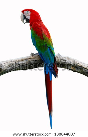 A beautiful Parrot, Red-and-green Macaw isolate on white background. - stock photo