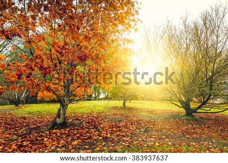 A beautiful peaceful autumn scene in the park during the rain. Cross-processing effect applied. - stock photo