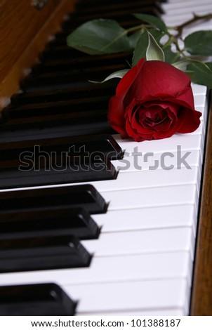 A beautiful red rose laying on piano keys - stock photo