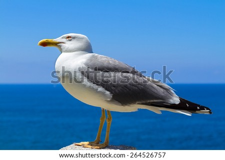 a beautiful seagull poses, with a background of sky and sea - stock photo