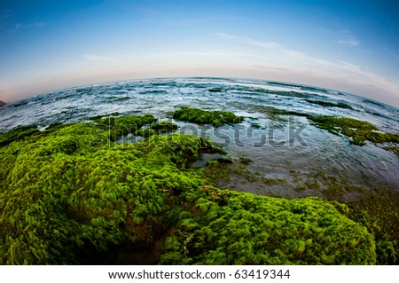 A beautiful shore with lots of green ans blue - stock photo