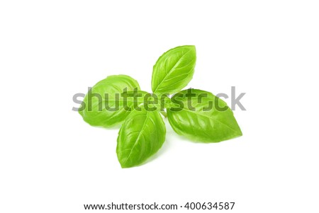 A beautiful sprig of fresh Basil.Isolated on a white background. - stock photo