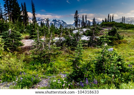 A Beautiful Summer Alpine Meadow at Paradise Lodge on Mount Rainier in August. - stock photo