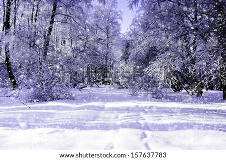 A beautiful sunny winter day.Trees covered with hoarfrost and snow  - stock photo