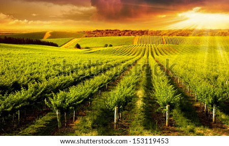 A Beautiful Sunset over vineyard in South Australia - stock photo