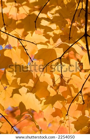 A beautiful tapestry of autumn leaves, with vivid yellows and a touch of orange as well. - stock photo