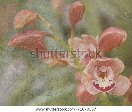 A Beautiful, Textured Card of Pink Orchid Flowers, with Room for Text - stock photo